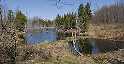 80297LAN5230-Beaver-pond.jpg
