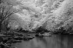 81758Little_River_0705200603609a.jpg