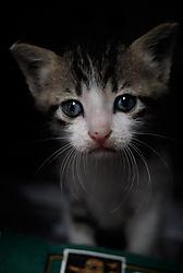 85831Tiong-Bahru-Kitten.jpg