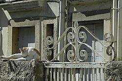 98259Cat_Corfu_DSC0875.jpg