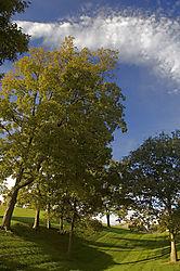 102867Squirrel_Trees_copy.jpg