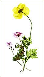 16563flowers.jpg