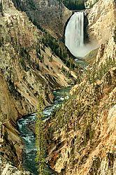 19248Lower_Yellowstone_falls_D2X1796-a800s-web.jpg