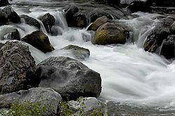 Rapids-web.jpg