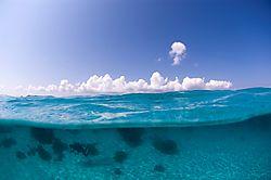 115966C_LEE_-_Underwater_800x532.jpg