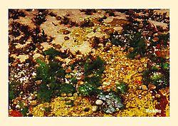 12017Tidal-Pool-Crop.jpg
