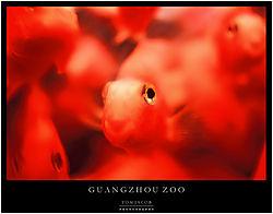 61207FishGuangzhou.jpg