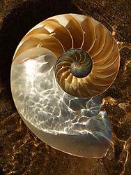 86715Nautilus_Shell_Perfect.jpg