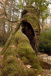 6509926_Twisted_Tree.jpg