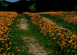 Flower_road.jpg