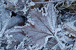 Beauty_of_a_Frosty_Morning_resized_.jpg