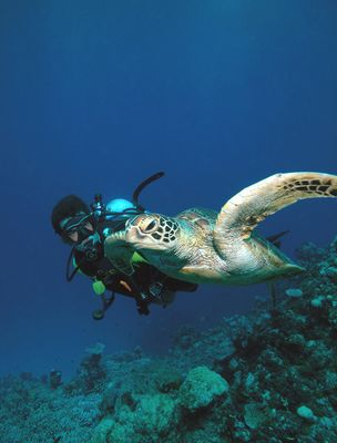 53699Son_with_Green_Turtle_Gary_Brennand_Underwater_61