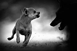53699Big_Bad_Wolf_Melanie_Snowhite_Pets_5.jpg