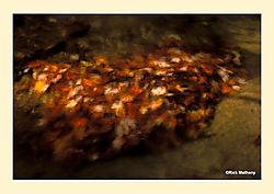 12017Leaves-Under-Water.jpg