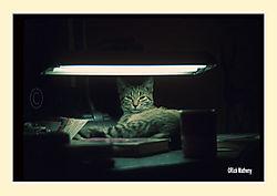 12017My-CatS2.jpg