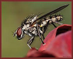 Fly_Small_DSC_0748.jpg