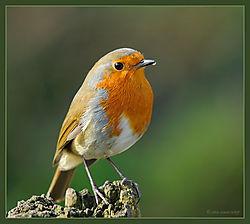 Robin-DSC_0314_Web_Gallery.jpg