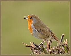 Robin-DSC_0355_Web_Gallery.jpg