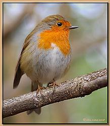 Robin-DSC_9624.jpg