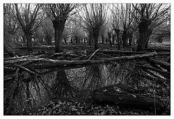 33915Sumpf_f_r_Nikonians_Galerie1.jpg