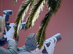 98259Golden_Palm_-_Cannes_2007.jpg