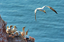 5215Helgoland-Day_4_0537.jpg