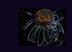 130620Flower_Punk_framed_small.jpg