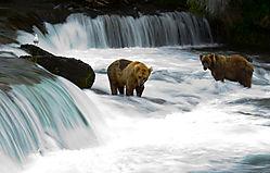 looking-for-salmon1.jpg