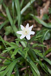 spring_lane_flower_1_.jpg