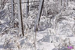 VNM3254_snow_sm.jpg