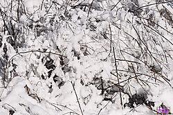 VNM3271_snowtwigs_sm.jpg
