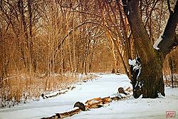 VNM3934_trees_nik.jpg