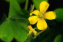 4stack_wildflower_sm.jpg