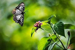 DSC2693_butterfly_nik.jpg