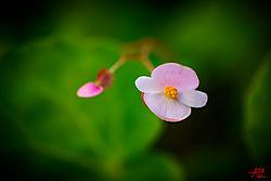 VNM9089_gardenflower_sm.jpg