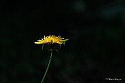 VNM9364_weed_400mm_sm.jpg