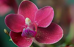 orchid1_14x9_sm.jpg