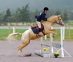 Horse_and_Rider_II.jpg