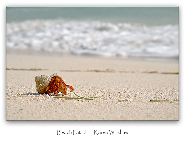 137_Marjani_Hermit_crab_beach_patrol