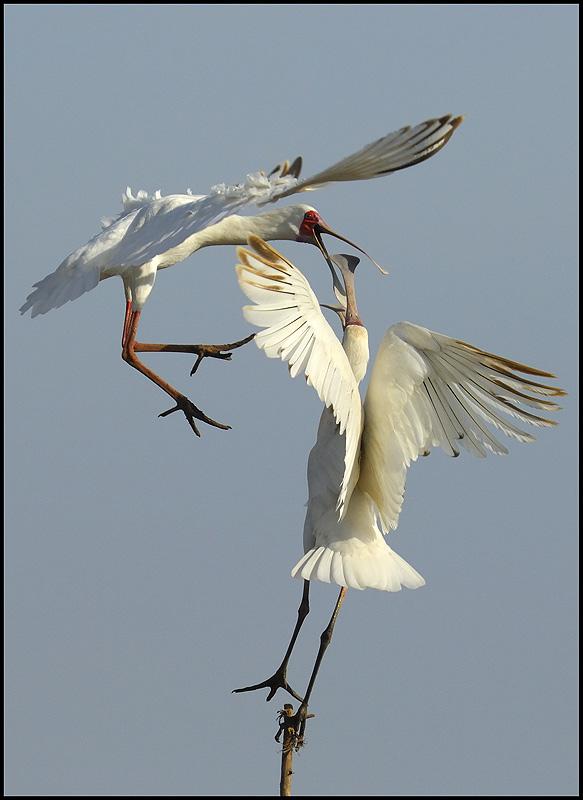 74_Louis_Birds