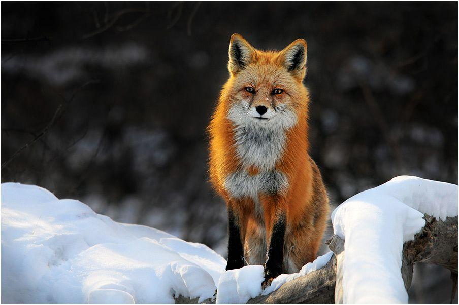december_wildlife_Scottashley
