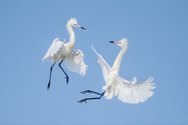 Winner June  Wildlife