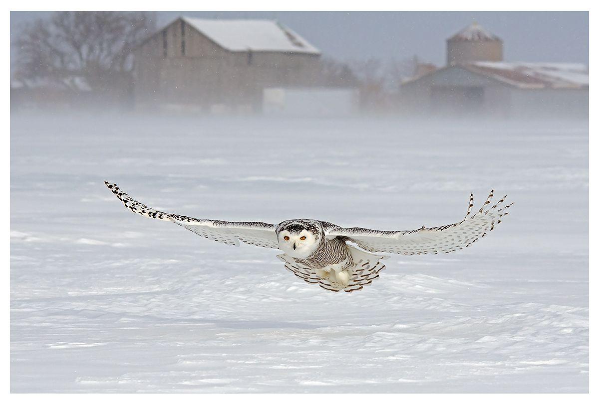 november_wildlife_Rassie