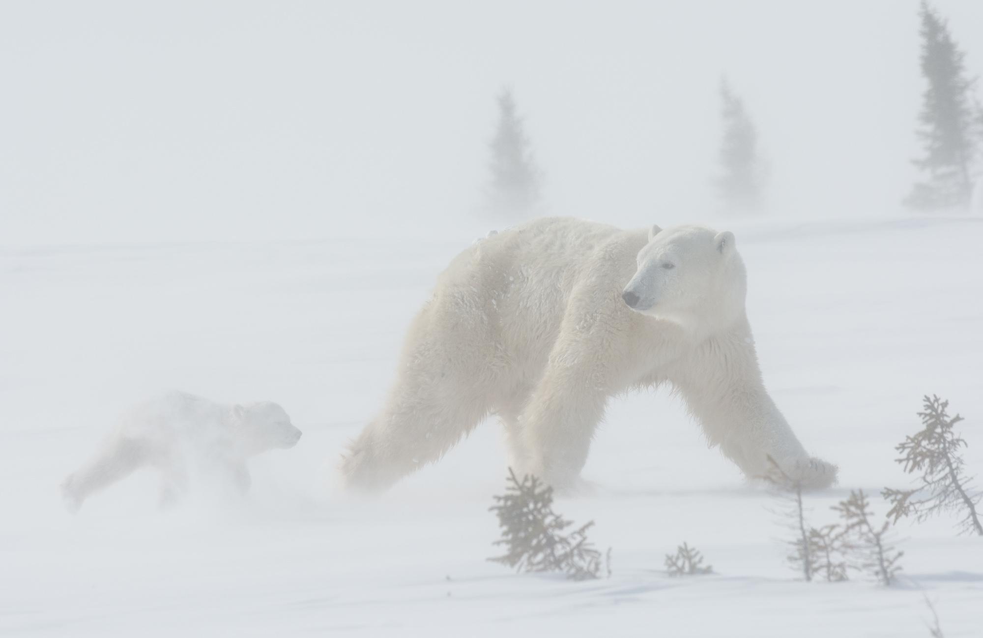 november_wildlife_ricardo00