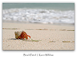 137_Marjani_Hermit_crab_beach_patrol.jpg