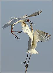 74_Louis_Birds.jpg