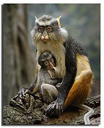 Wolfs-Monkey-101-2-WM2.jpg