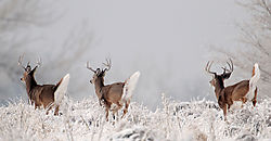 august_wildlife_VCottman.jpg