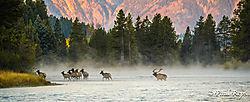 august_wildlife_preps.jpg