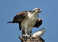 december_wildlife_Slopoki1.jpg